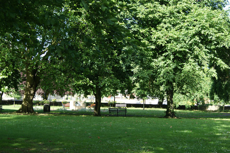 A row of trees in a park, with a bench between two of the trees.