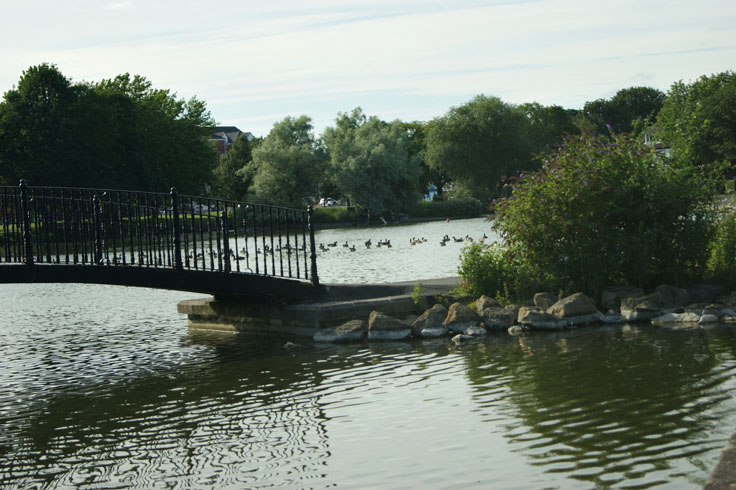 A bridge over a lake, with geese swimming behind the bridge.
