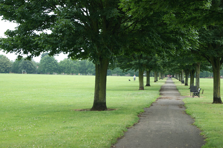 A path with rows of trees either side, and a man walking his dog on a field to the left.